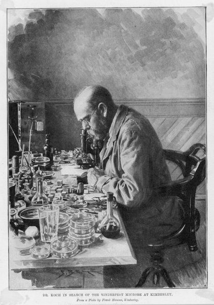 HEINRICH HERMANN ROBERT KOCH German physician and pioneer bacteriologist in search of the Rinderpest microbe at Kimberley
