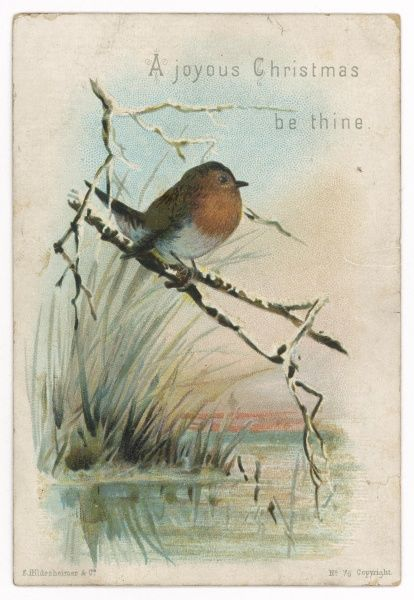 A robin on a wintry bough over a pond