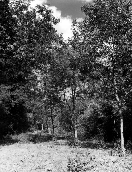 A forest road through Rockingham Forest, near Brigstock, Northamptonshire, England. Date: 1960s
