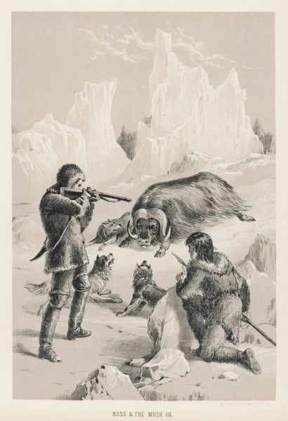 James Clark Ross, serving with his uncle, kills a musk ox
