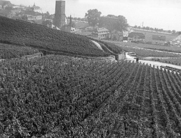 Vineyards at Rudesheim, Rhine Valley, Germany. Date: 1980s