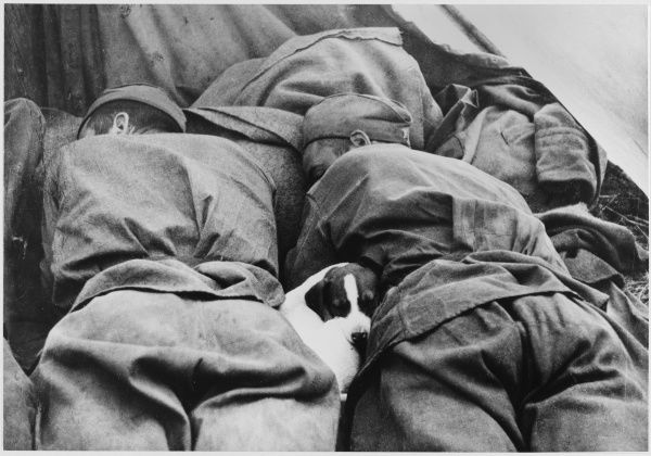Soviet soldiers are befriended by a stray dog