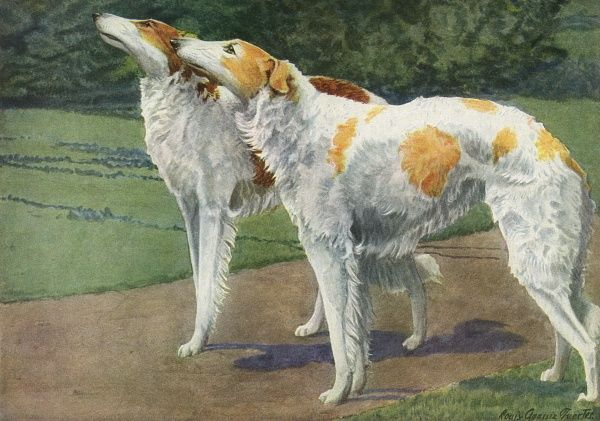 Russian Wolfhounds, white coats with brown patches Date: 20th century