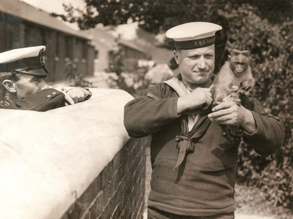A sailor in the uniform of HMS Ganges during the First World War, with a monkey mascot. The Ganges was a Royal Navy training ship, established in 1865 and remaining in service until 1976. It was based variously at Falmouth, Harwich and Shotley