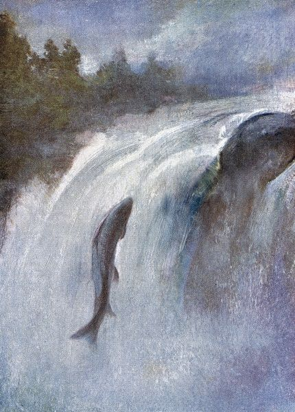 A salmon leaps high into a waterfall, against the flow