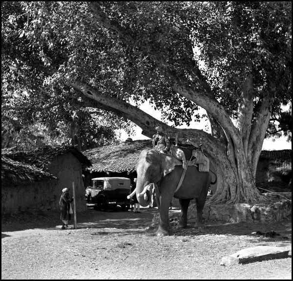 Outdoor scene with an elephant in Madhya Pradesh Province, India. Photograph by Ralph Ponsonby Watts