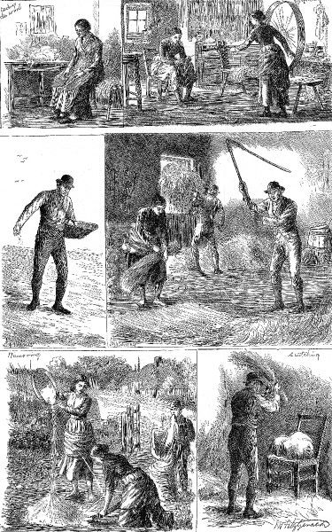 These illustrations show women and men engaged in activities such as carding wool, spinning, sowing, threshing, minnowing and 'scutching&#39