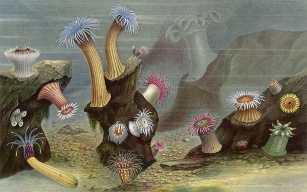 An assortment of sea anemones