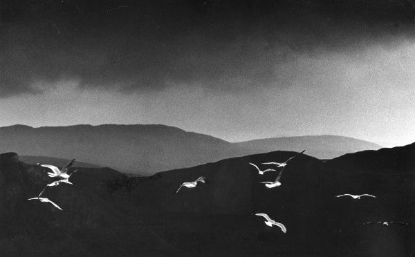 A flock of seagulls flying across a dark landscape of gently rolling hills