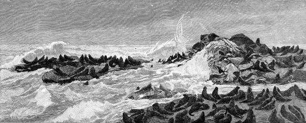 Engraving showing the rocky shore of Seal Point on the Faralone Isles, in San Francisco Bay, 1888. A large number of seals sit on the rocks named after them