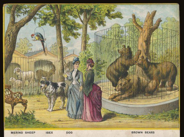 Regent's Park zoo, London Visitors admire sheep, ibex, bears - and a dog who seems to be wandering freely