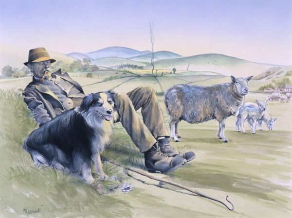 An elderly shepherd rests on a small hillock with his collie dog as his sheep graze contentedly. Painting by Malcolm Greensmith