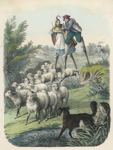 Shepherds of Les Landes in south-western France, using stilts to help them keep an eye on their flocks