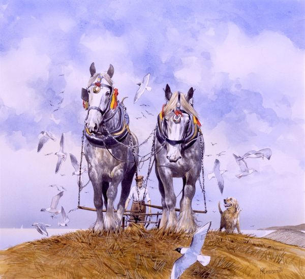 A team of two white shire horses pull a light plough across a field of recently cut corn. Painting by Malcolm Greensmith