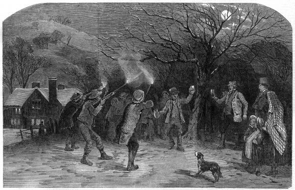 In Devonshire, on Twelfth Eve, countryfolk go into the orchards and shoot at one of the best trees, to ensure a good fruit crop : much cider is drunk on this occasion... Date: 1851