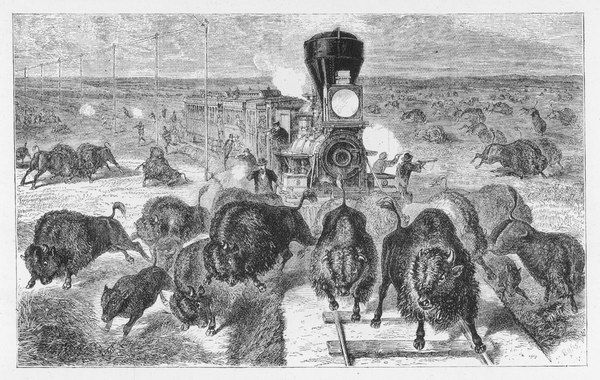 Shooting buffalo from a train, on the Kansas Pacific Railway
