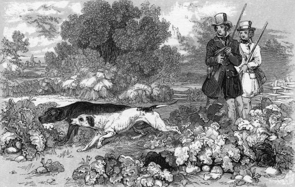 PARTRIDGE - Two men wait while their game dogs stalk some partridge for them to shoot. Date: circa 1840