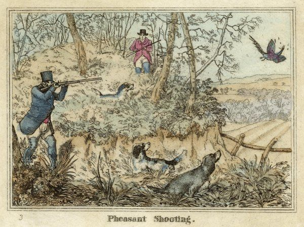 PHEASANT - Two men and their dogs shoot from a clearing
