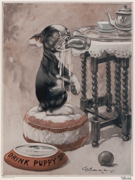 Instead of drinking from his dog bowl, a naughty puppy instead chooses to climb up at a table and help himself to water from a jug. Credit line must read: Estate of George Studdy/Gresham Marketing Ltd./Mary Evan&quot