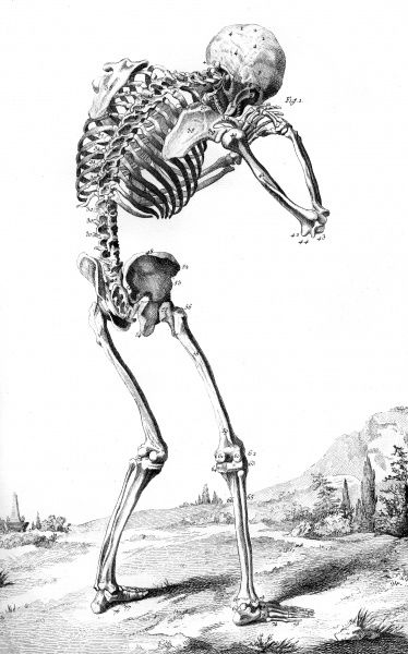 A skeleton as seen from behind Date: Circa 1760
