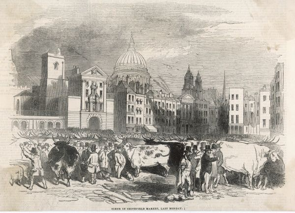 A scene in Smithfield Market with traders examining and discussing huge cattle