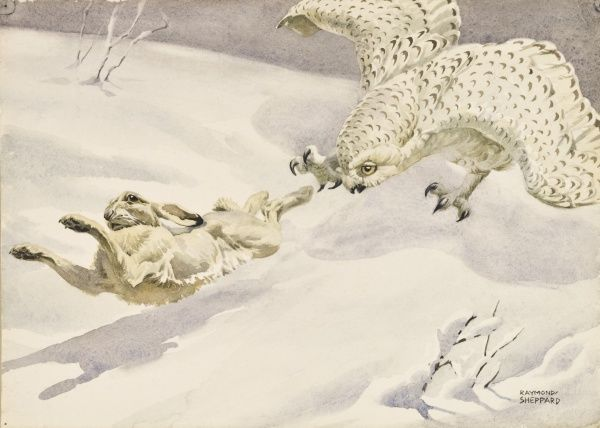 A Snowy Owl swoops to catch an Arctic Hare in its talons. Painting by Raymond Sheppard