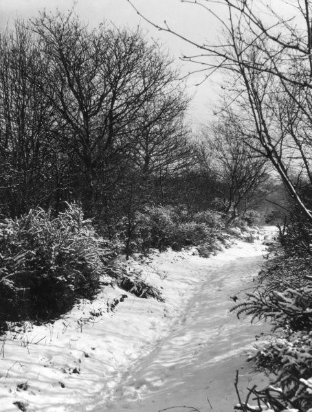 Winter in the woods. Date: 1960s