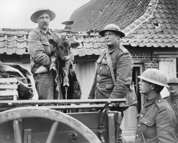 Soldiers with a calf near Havershergue on the Western Front in Belgium during World War I on 1st May 1918