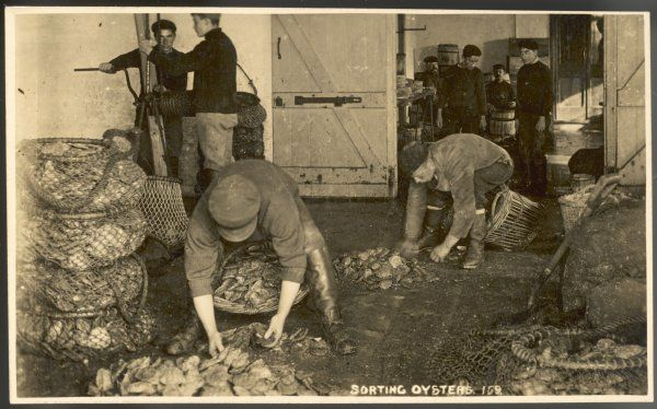 oyster sorters sorting oysters