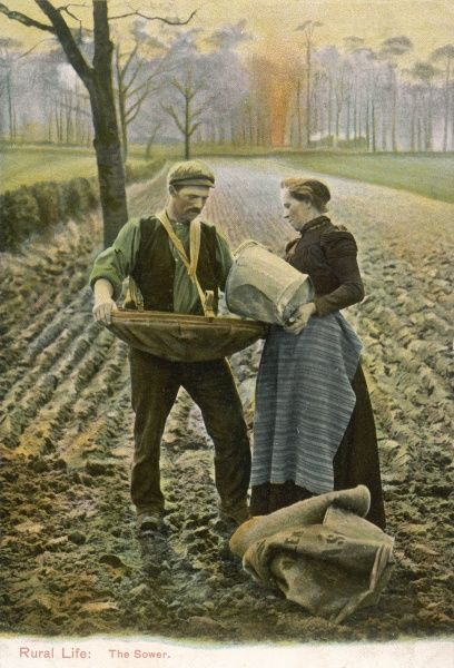 A farmer and his wife sow their fields - she brings him the seed, he scatters it from the tray slung at his waist