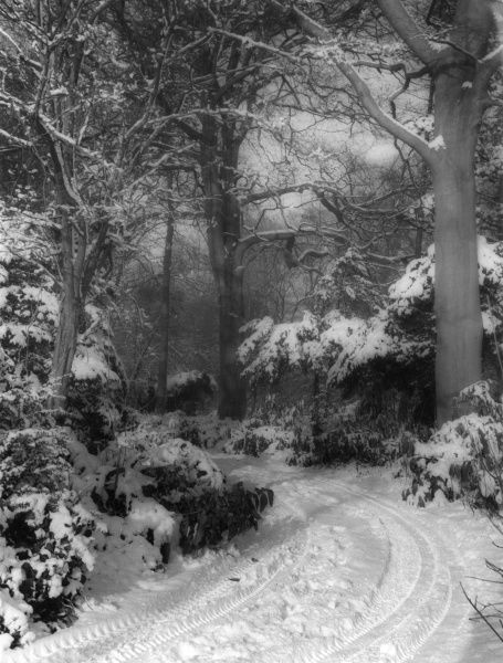 A rather spooky snow scene - Winter in lane in the woods... Date: 1960s
