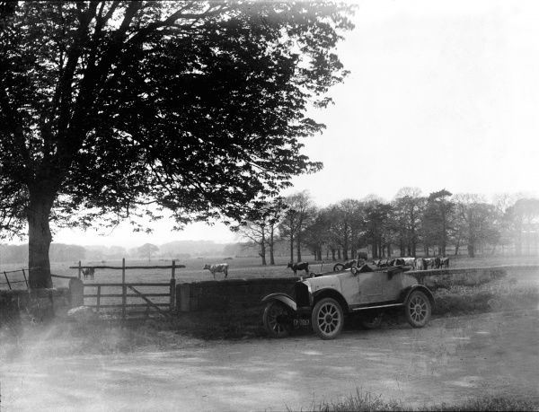 A sports car parked at the roadside close to a field of cattle