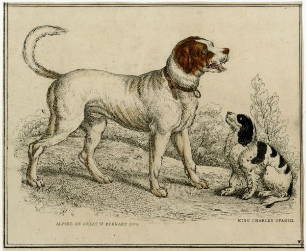 A St Bernard with a King Charles spaniel Date: 1840