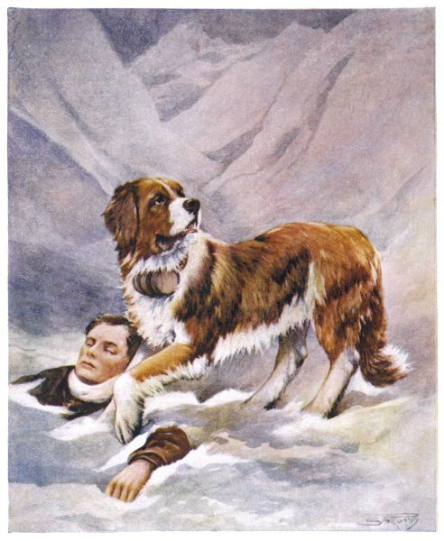A Saint Bernard finds a man trapped in the snow