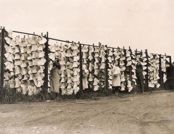Hundreds of straw sun-hats being dried in the open air at a Luton factory