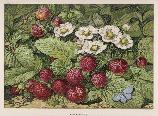A bunch of decorative strawberries and their flowers