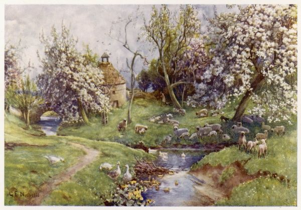 A picturesque stream in the English countryside, with geese on the banks and swimming, and a flock of sheep neath the spring blossom