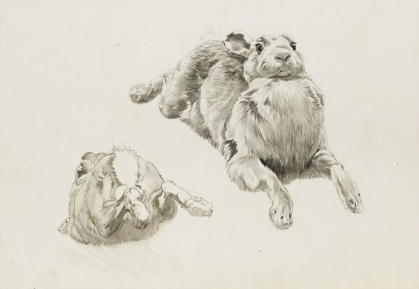 Pencil studies of a hare by Raymond Sheppard