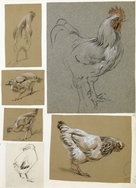 Six studies of poultry -- a cockerel and a chick