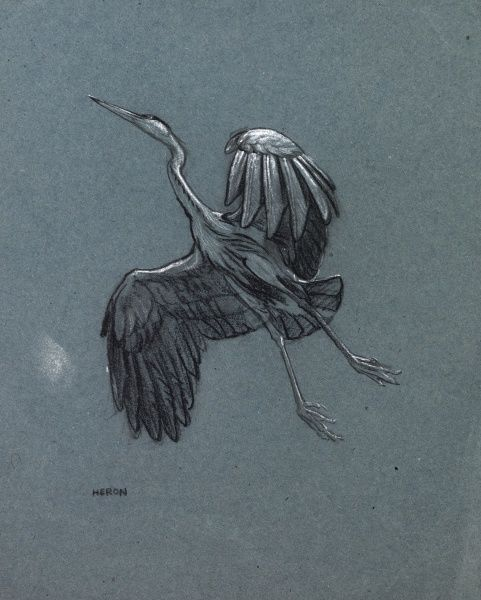 Study of a heron in flight