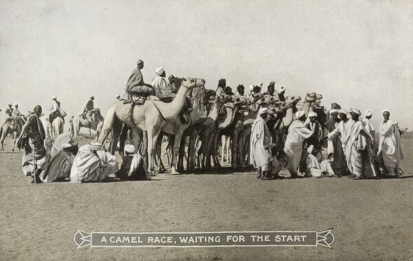 Sudan - A Camel Race - waiting for the start. Date: circa 1910s