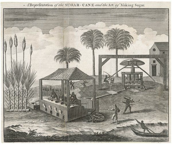'A Representation of the SUGAR-CANE and the Art of Making Sugar.&#39