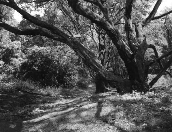 Sunshine and shadow in Swithland Woods, Charnwood Forest, Leicestershire, England. Date: 1930s
