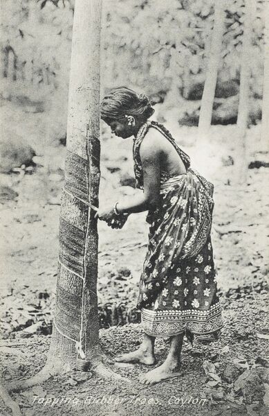 A woman in Ceylon tapping a rubber tree with traditional techniques