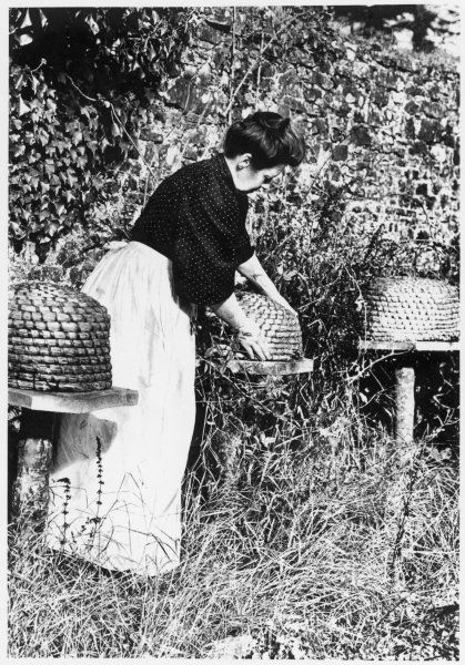 A lady bee keeper tending her bees