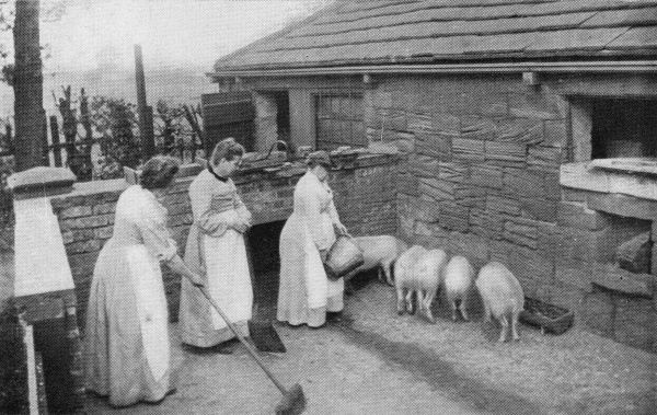Inmates tending pigs at the North Midlands Inebriates Reformatory at Ackworth near Pontefract, West Yorkshire