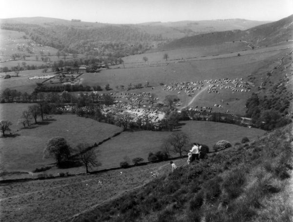 A family walking on the slopes of Thorpe Cloud (900 feet high), looking towards Thorpe Village, Derbyshire, England. Date: early 1960s