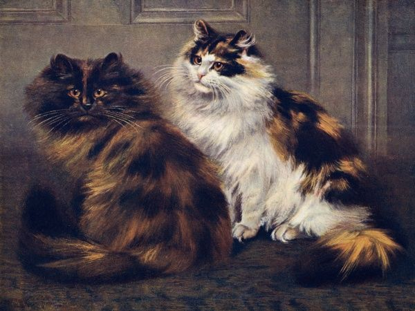 Two Persian cats, one tortoiseshell and one tortoiseshell-and-white, sit together. Date: 1903