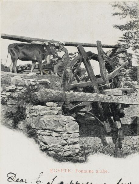 A traditional ox-powered Egyptain water wheel, used to draw up water from the Nile for irrigation