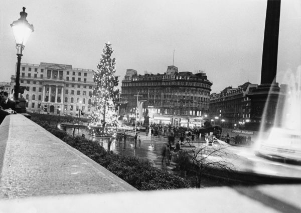 The Christmas tree in Trafalgar Square, the traditional gift of the people of Norway Date: 1960s
